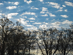 Clouds And Sky With Trees. (dccradio) Tags: lumberton nc northcarolina robesoncounty outdoor outdoors outside nature natural friday morning goodmorning fridaymorning winter february midfebruary sky cloud clouds tree trees treebranch branch branches treebranches treelimb treelimbs