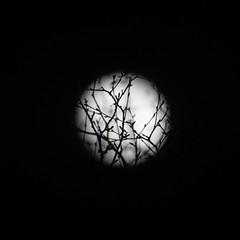 49/365 - Moonstruck (efsb) Tags: 49365 project365 2019inphotos 2019yip moon sonyrx10mk3