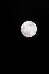 Snow Moon (Frank Berbers) Tags: snowmoon supersnowmoon fullmoon supermoon vollemaan hungermoon fullmoonforfebruary nikond5600 februari 19022019 2019 vollmond pleinelune