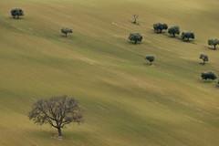 in ordine sparso (luporosso) Tags: natura nature naturaleza naturalmente nikon nikond500 nikonitalia alberi trees campagna campi terra terraarata plowedland earth colline hills country countryside marche civitanovamarche italia italy