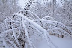 Groundhog day 2019 (John Andersen (JPAndersen images)) Tags: bluehour bowriver bridge calgary canon cityskyline cold frost morning snow steam trees winter