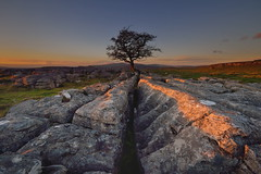 Last rays (images@twiston) Tags: sunset shadows lastlight thewinskilltree hawthorn tree thelimestonetree winskillstones winskill stones scar dales nationalpark lone solitary limestone pavement clints grykes northyorkshire yorkshire limestonepavement grikes bleak stark fell rock rocks gnarled gnarly 3peaks yorkshire3peaks whernside ingleborough landscape yorkshiredales langcliffe imagestwiston winter godsowncountry godsowncounty ribblesdale dusk goldenlight goldenhour nisi gnd neutraldensity grad