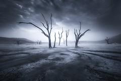 Relic of the River (Ryan Dyar) Tags: dead trees ryandyar tour workshop squiver dunes dune sand playa desert africa nationalpark naukluft namib namibia deadvlei