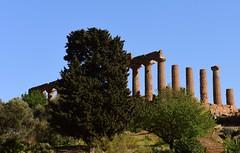 Valle dei Templi, Agrigento, Sicily DSC_8959 (2) (tango-) Tags: valledeitempli agrigento sicilia sicily italia italy sicilya sicile σικελία szicília 시칠리아 סיציליה сицилия صقلية tiberiofrascari