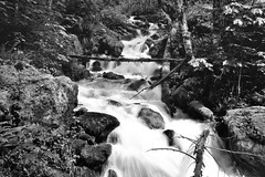 Monogram Creek (Black & White) (thor_mark ) Tags: azimuth335 blackwhite boulders capturenx2edited cascaderiverroad colorefexpro creek day8 landscape largerocksinstream lichenontrees lookingnw monogramcreek mossontrees mountbakersnoqualmienationalforest nature nikond800e northcascadesnationalparkservicecomplex outside overcast project365 rapids rocksinstream trees triptonorthcascadesandwashington waterflowingdownstream waterfall mountbakersnoqualmienational washington unitedstates