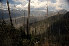 The Great Alpine Way March 2019 (i_shudder) Tags: greatalpineway alpine mountain australia victoria autumn composition mountains clouds altitude eucalyts ghostgums