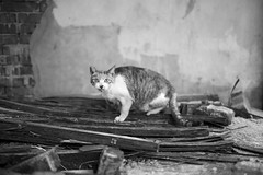 (jasoncremephotography) Tags: leica m10p voigtlander nokton 40mm cat feline blackandwhite monochrome
