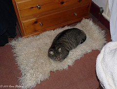 March 21st, 2019 Go away - this is all MINE! (karenblakeman) Tags: cat tabby willow willowmeowmau sheepskin march 2019 2019pad uk rug