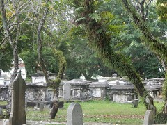 Graves Under Hairy Branches (mikecogh) Tags: georgetown cemetery graves dead big solid moss branches hairy