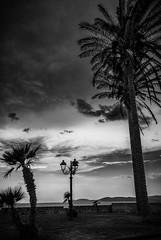 Alghero (mlk.dahoui) Tags: sardaigne2018 seascape sky clouds nikon bw sardinia italy sunrise alghero d750 wall bricks palm landscape nikonflickraward travel 24120