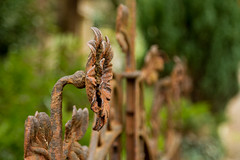 Eisenzaun (gutlaunefotos ☮) Tags: eisenzaun alt rost zaun friedhof blüte
