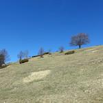 2019-03-29 03-31 Südtirol-Trentino 033 Caldonazzo-Lochere, Pizzo di Levico thumbnail