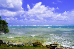 OAHU-HAWAII_1D50852-01 (Donna Molinari Photography) Tags: sanjose ca usa