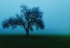 Sunyata (Silvio A) Tags: nebbia fog mist tree albero