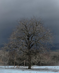 Mein Freund, der Baum (Fay2603) Tags: nature natur natura tree baum albero arbre cold kalt winter wintertime wonderland tags hinzufügen fuji xe1