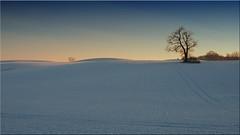Winter landscape in Holstein in February 2018 (Ostseetroll) Tags: deu deutschland geo:lat=5420331570 geo:lon=1068198680 geotagged kirchnüchel schleswigholstein winterlandschaft holstein schnee snow winterlandscape olympus em5markii