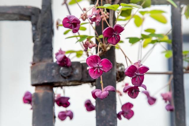 Обои цветы, фон, забор картинки на рабочий стол, раздел цветы - скачать
