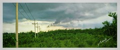 Texture (ashiktanvir52) Tags: texture trees green woods sky light jungle