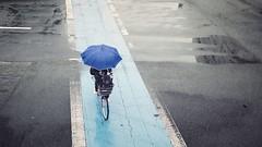 徳島で雨の日 (リンドン) Tags: 徳島 四国 日本 雨 道 青 傘 自転車 交差点 shikoku japan umbrella brolly blue crossing bike cycle fujifilm xt1 23mm 14