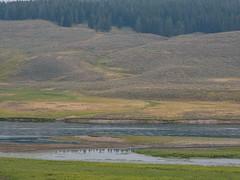 0623-J20 - Yellowstone - Cody-1808160917 (Chouettes de Crolles) Tags: 2018usa 2018usaj20yellowstonecody cody lieux usa vacancesété wyoming étatsunis us