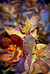 Flowers - photoart (EOSXTi) Tags: ddg flower art