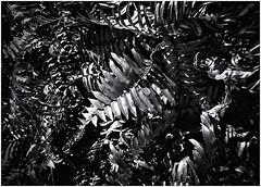 Lomography (Black and White Fine Art) Tags: lomography lomo aristaedu100 holga holga120s toycamera camaradejuguete plasticcamera camaradeplastico sanjuan oldsanjuan viejosanjuan puertorico bn bw niksilverefexpro2 lightroom3
