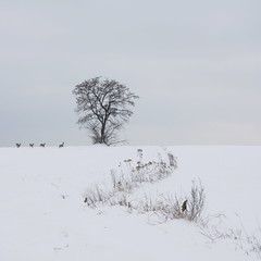 Lanscape turned wildlife shoot 1 sq b (david.neville2776) Tags: snow deer tree grasses
