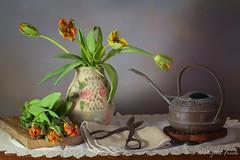 Still life with parrot tulips (Phyllis Freels) Tags: phyllisfreels board brown copper flowershears flowers green orange parrottulips stilllife vase vintage wateringcan wood