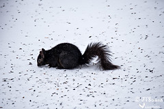 _J5S1162 (Jim Sousa) Tags: animals