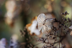 Winter decay,... (Wim van Bezouw) Tags: sony ilce7m2 winter plant leaf bokeh forest