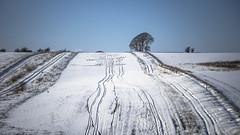 so many lines (Redheadwondering) Tags: sonyα7ii snow salisburyplain wiltshire winter landscape tracks byway road trees minolta minolta100200mm lines