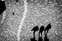 DSC_5224 (http://georgepramaggioulis.wixsite.com/aperture) Tags: bw blackandwhite minimal shadow day sun birds lines three