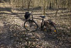 en forêt avec ma bicyclette (JJ_REY) Tags: forêt forest bicyclette bicycle bike leica m8 elmarit28mmasph colmar alsace france