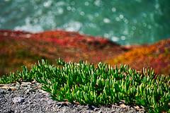 Beach flora & texture I (mgschiavon) Tags: plants green sea blue macro texture nature colors abstract