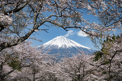 Framed by Cherry Blossoms (Yuga Kurita) Tags: panasonic s1 japan cherry blossoms blossom lumix 24105mm macro sakura hanami snowcapped mountain fuji san fujiyama fujisan mt landscape nature spring