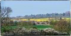 The Spring Meridian (Peter Leigh50) Tags: meridian east midland railway railroad rail rural train trees track trains leicestershire landscape landschaft wistow fujifilm fuji field farmland wood hedge xt2