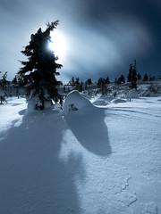 20190220_north_0293 (Andrei Baskevich) Tags: auroraborealis aurora northernlight winter trees frost frozen light night moonlight