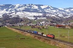 Re 4/4 11256 bei Steinen (Dennis Kraus) Tags: re 44 420 11256 steinen schweiz gotthard güterzug