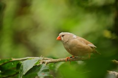 Bird isolated (Arturo FS) Tags: naturaleza bokeh nature verde blanco green white solo isolated ave pajaro bird