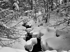 Winter Wonderland - Auerbach Creek, Bavaria (W_von_S) Tags: tatzelwurm auerbach creek bach wasser snow water schnee schneelandschaft snowscape snowlandscape snowshoehike schneeschuhwanderung winter winterwonderland winterpanorama landschaft landscape paesaggio panorama paysage natur nature sudelfeld bavaria bayern alpen alps mountains berge bäume trees wald wood forest wvons werner sony sonyilce7rm2 januar january 2019 outdoor schwarzweis blackwhite sw monochrome skancheli pattern