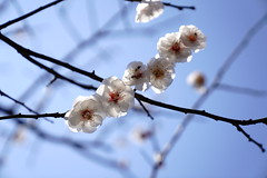 plum (chocoogirl) Tags: sony alpha 7riii spring