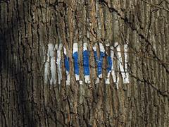 Signs of Obesity (☁ ▅▒░☼‿☼░▒▅ ☁) Tags: olympus omd em5mkii minolta rokkor mecsek woods forest