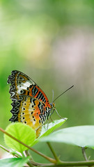 2019-02-11_12-48-19_ILCE-6500_DSC02838_DxO (Miguel Discart (Photos Vrac)) Tags: 150mm 2019 animal animalphotography animals animalsupclose animaux butterfly chiangmai createdbydxo dxo e18135mmf3556oss editedphoto fleurs flowers focallength150mm focallengthin35mmformat150mm holiday ilce6500 iso250 nature naturephotography papillon pet sony sonyilce6500 sonyilce6500e18135mmf3556oss thailand thailande travel vacances voyage
