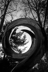 round and round (primemundo) Tags: circular roundandround monochrome bw trees dogwood dogwood2019 newbeginnings
