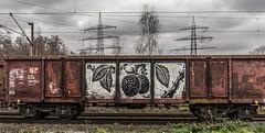 12_2019_01_16_Gelsenkirchen_Bismarck_1261_025_DB_mit_Übergabezug ➡️ Gelsenkirchen_Bismarck (ruhrpott.sprinter) Tags: ruhrpott sprinter deutschland germany allmangne nrw ruhrgebiet gelsenkirchen lokomotive locomotives eisenbahn railroad rail zug train reisezug passenger güter cargo freight fret bismarck bottropsüd ctd captrain db hctor hhpi 0632 1266 1232 1261 6152 6185 6187 6241 class66 vtgch rb42 hochspannungsmast kraftwerk herne dorsten dortmund logo natur outdoor graffiti