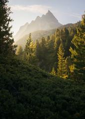 Mighty (Andrea Knobel) Tags: landscape nature outdoors adventure exploration hike hiking peak pines trees green lush hazy morning sunrise glow sidelight switzerland schweiz suisse svizzera wild wilderness