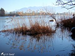 Lac de Bret 1 (Jean-Daniel David) Tags: nature lac lacdebret puidoux suisse suisseromande vaud ciel montagne eau reflet roseau arbre bateau paysage verdure alpes
