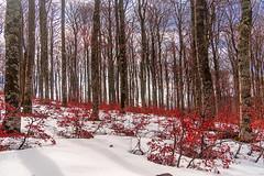 _SAN CRISTOBAL 1 (juan luis olaeta) Tags: paisajes landscape nieve elurra snow araba contraluz photoshop fujifilmxt2 lightroom