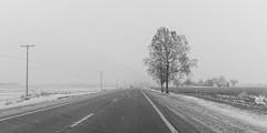 A Tree and 43 (joeldinda) Tags: graysky grey gray greysky winter sky cloud tree paved 4402 january stubble road highway fields powershotg9xii g9x canon 2019 roxandtownship roxana michigan eatoncounty