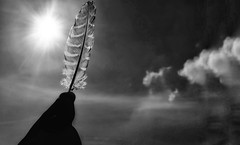 Feather in sky (Praveen Banneka) Tags: feather sun bright sky asia bird blackandwhite vintage clouds srilanka southasia owl night harrypotter backlit hand art nikon camera day daytime harsh